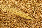Пшеница 3- 5 класса в мешках