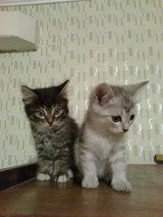 Кошки,