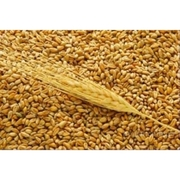 Пшеница экспорт морем